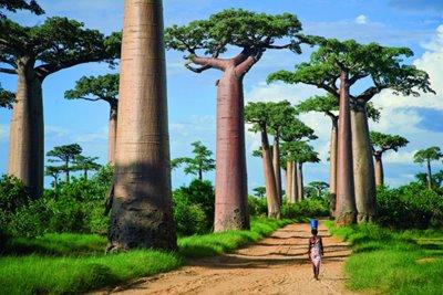 خیابانی خاص در میان درختان بائوباب