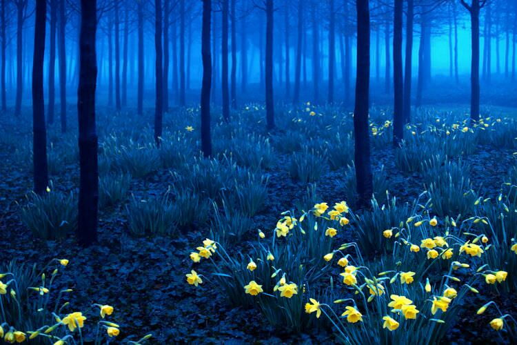 wpid-mysterious_forest11.jpg