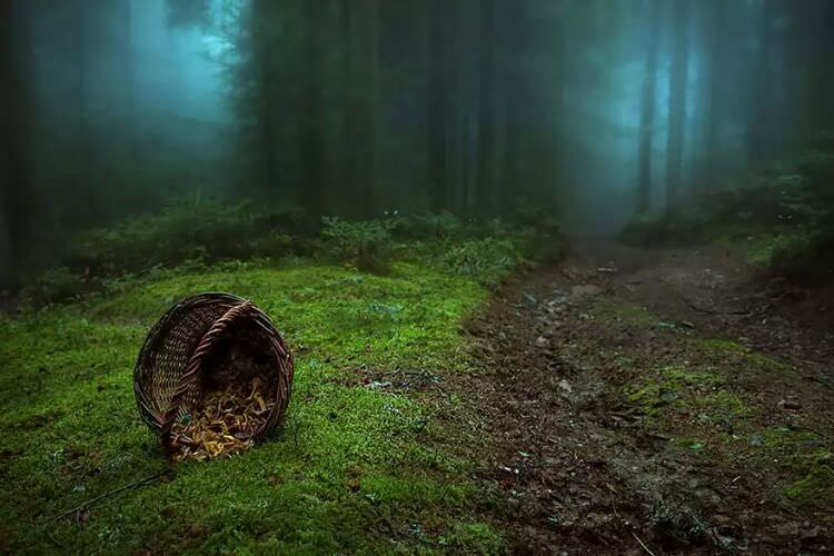 wpid-mysterious_forest12.jpg