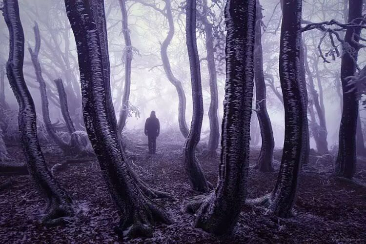 wpid-mysterious_forest14.jpg