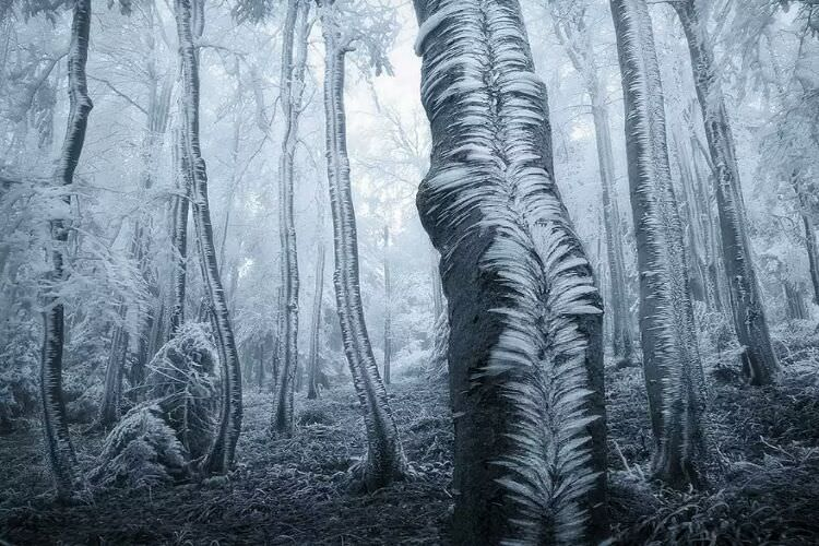 wpid-mysterious_forest3.jpg