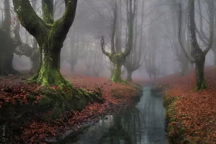 wpid-mysterious_forest4.jpg