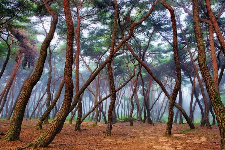 wpid-mysterious_forest8.jpg