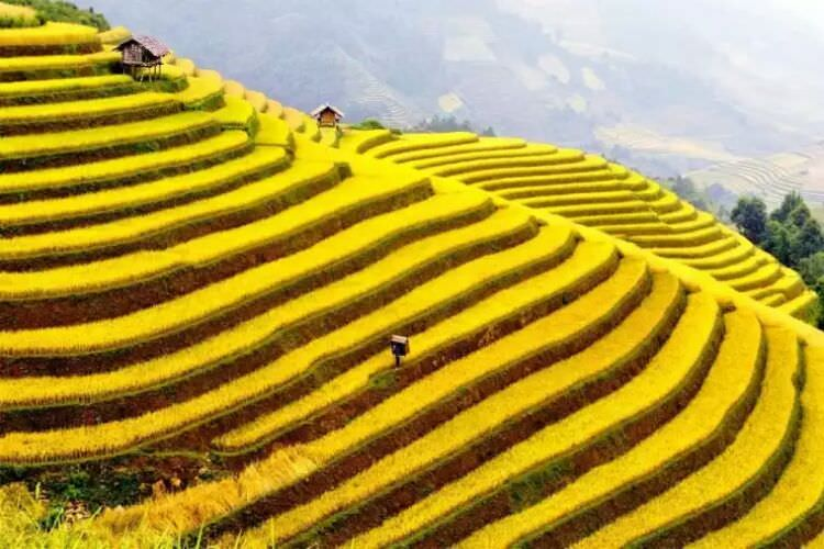 wpid-terraced_vietnam.jpg