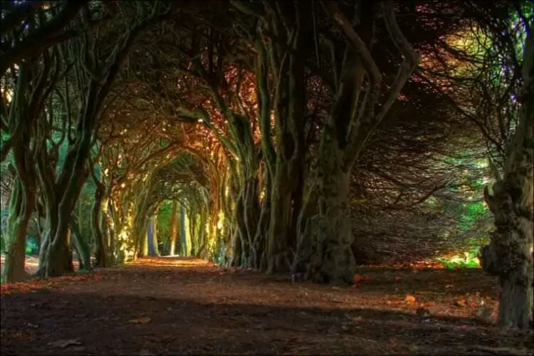 wpid-tunnel_meath_ireland.jpg