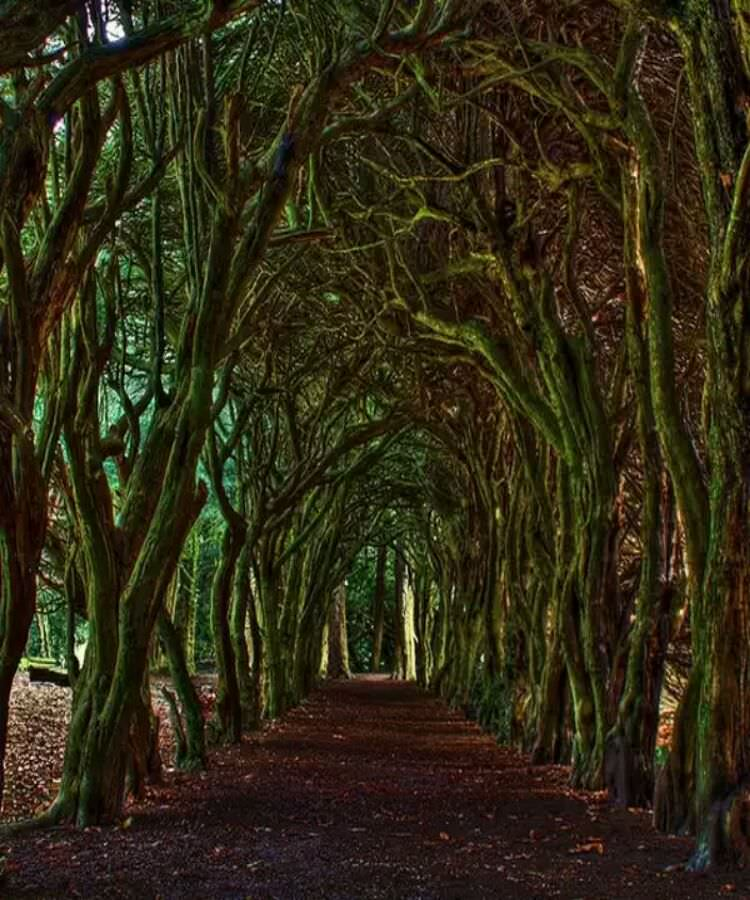 wpid-tunnel_meath_ireland2.jpg