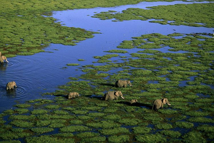 aerial-view-elephants-kenya-981243-xl