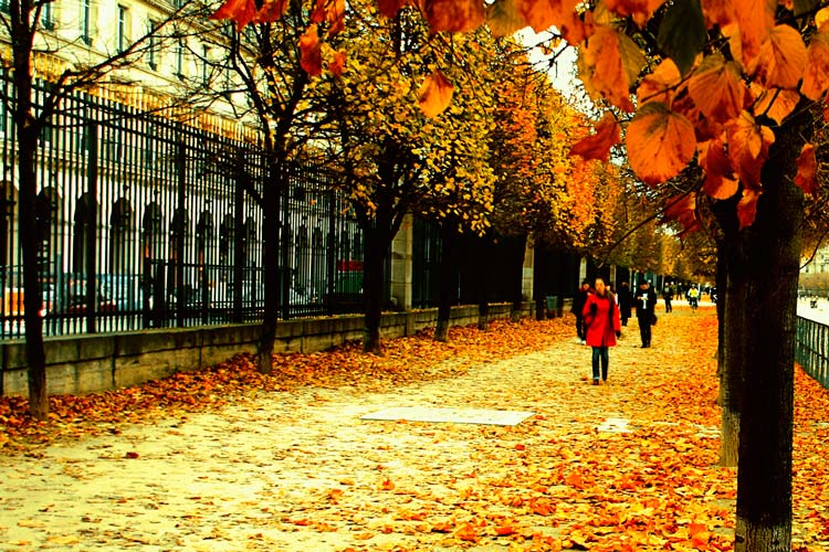 autumn_paris_france_840676