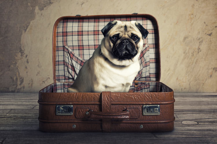 travelling-pets