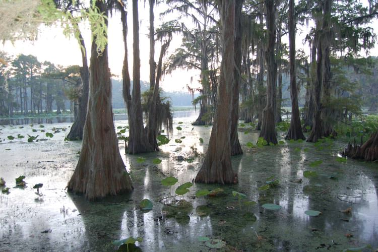 Caddo-Lake-Texas-and-Louisiana2
