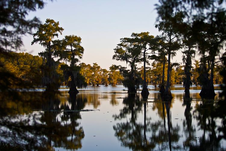 Caddo-Lake-Texas-and-Louisiana4