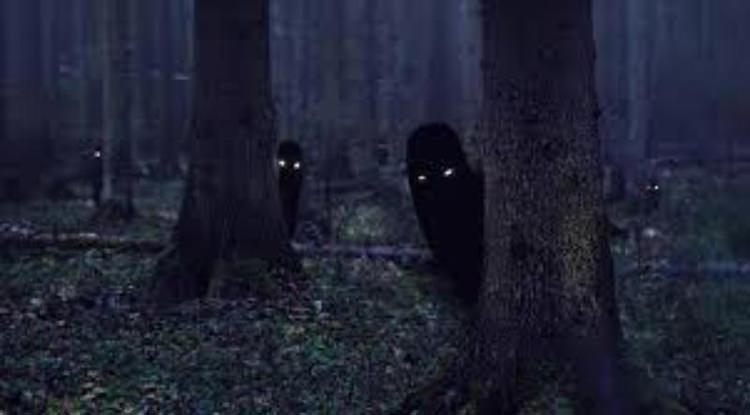 جنگل هویا