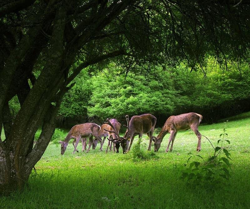پارک ملی ارسباران