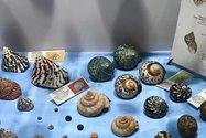 موزه صدف های ناژوان