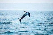 رقص دلفین های جزیره هنگام